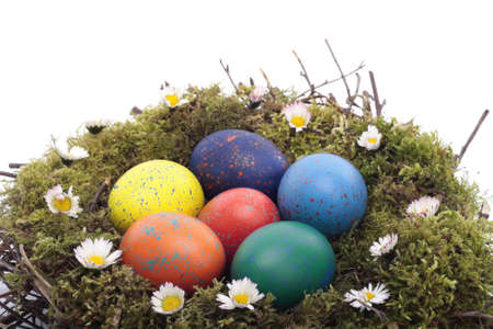 Colored  eggs in bird nest over white background photo