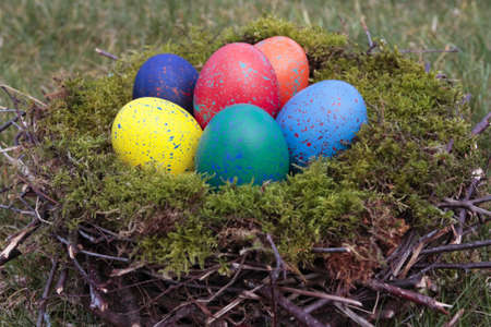 Colored  eggs in bird nest photo
