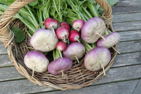 root vegetables: Principali ortaggi alzato su carrello