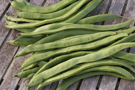 Freshly picked french green beans photo