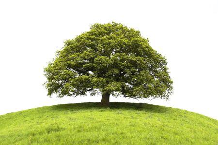 albero della vita: Albero e campo isolato su sfondo bianco Archivio Fotografico