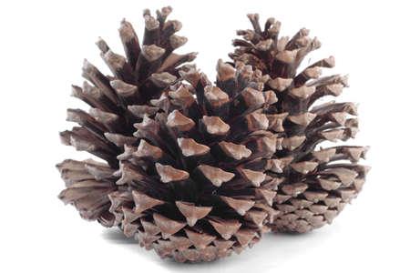 pinecones: Pinecones over white