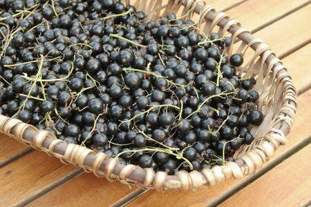 black currants: ripe  Black currants on willow basket