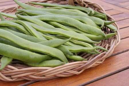 Freshly picked french green runner beans photo