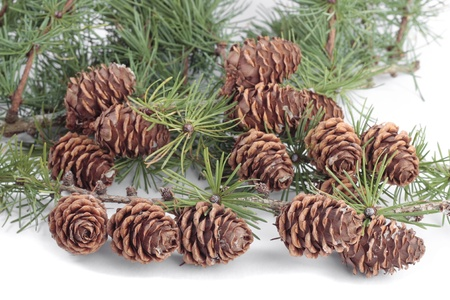 Christmas decorations pinecones photo