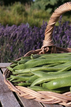 Green runner beans on basket photo