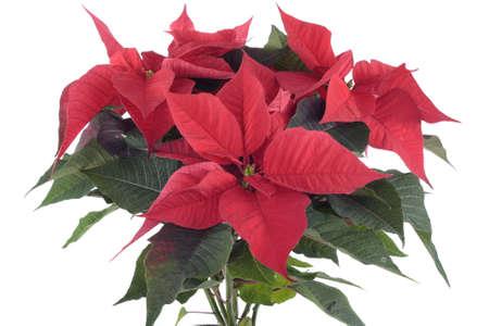 Christmas decorations closeup Stock Photo - 10850621