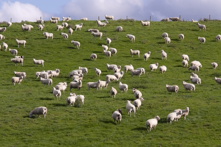 lambing: Lambs grazing in fresh pastures Stock Photo