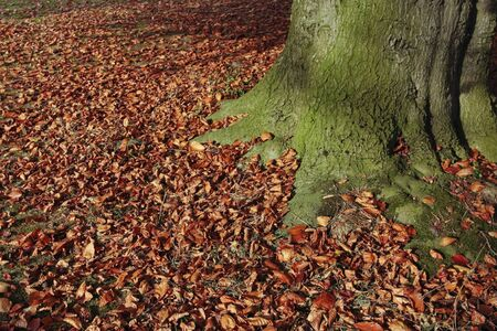 Fallen autumn leaves on grass lawn photo