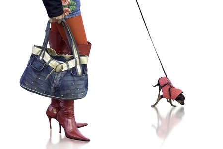 Sexy girl with cute Chihuahuas dog wearing red boots and stylish hand bag  With plain background   photo