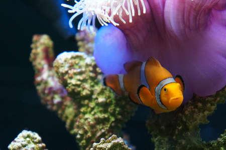 nemo: Nemo Fish