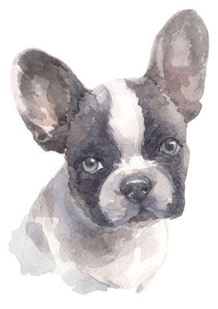 Water colour painting of French bulldog 007 Stock Photo