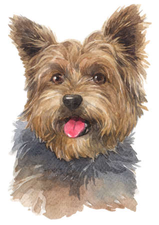 Water colour painting of Yorkshire Terrier 008