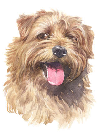 Water colour painting of Norfolk Terrier 005