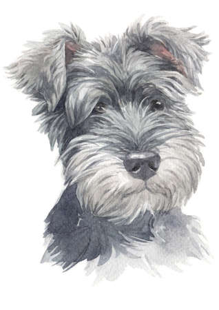 Watercolor painting of Miniature Schnauzer Stock fotó