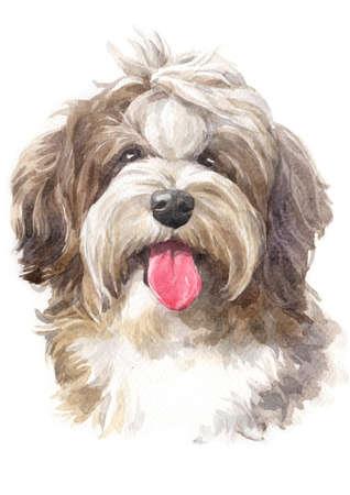 Watercolor painting, dog shape, shaggy Havanese