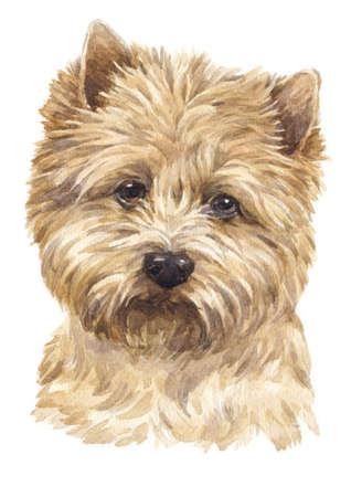 Watercolor painting of Cairn Terrier Standard-Bild