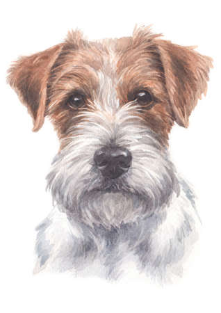 Water colour painting of Jack Russell Terrier 025