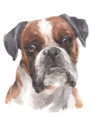 Water colour painting of Boxer Archivio Fotografico - 134838755