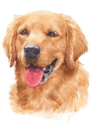 Water colour painting of dogs, golden hairs Golden Retriever