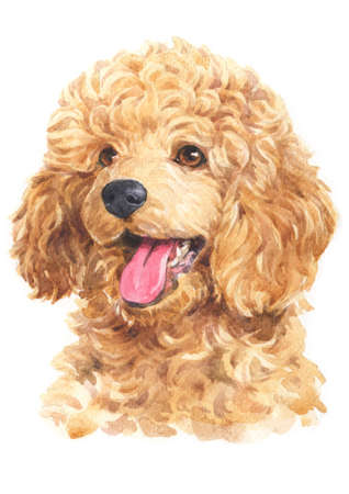 Water colour painting of Poodle