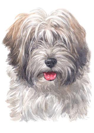 Watercolor painting of Tibetan Terrier 스톡 콘텐츠