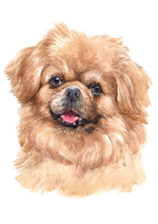 Water colour painting of Tibetan Spaniel 스톡 콘텐츠