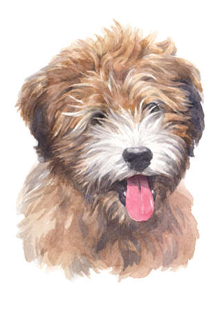 Water colour painting of Tibetan Terrier 스톡 콘텐츠