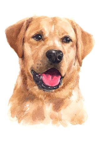 Water colour painting of Labrador Retriever