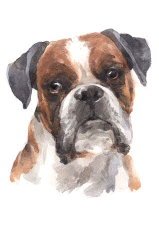 Water colour painting of Boxer Archivio Fotografico - 134839727