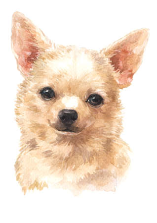 Water colour painting of Chihuahua Stock fotó