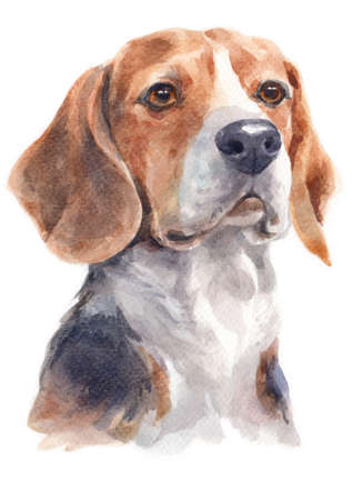 Water colour painting of Beagle