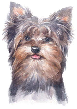 Water colour painting of York Shire Terrier