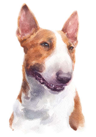 Water colour painting of Bull Terrier