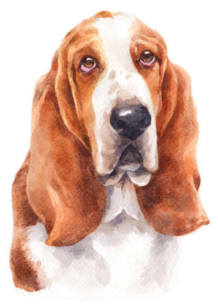 Water colour painting of Basset Hound Stock fotó