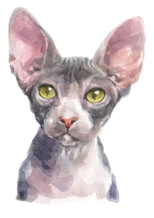 Water colour painting of Sphynx  Cat