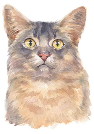 Water colour painting of Somali shorthair Cat Stock Photo