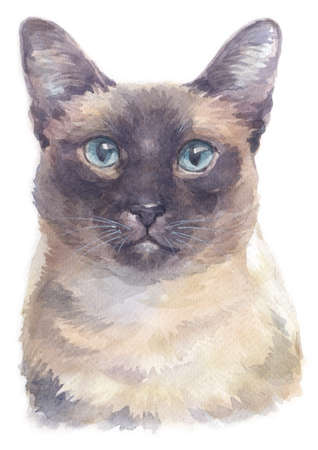 Water colour painting of Siamese shorthair Cat Stock Photo