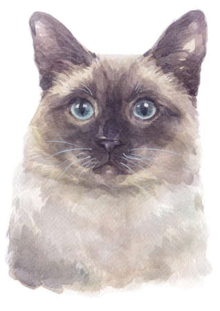 Water colour painting of Siamese shorthair Cat Banco de Imagens