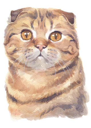 Water colour painting of Scottish fold Shorthair Cat