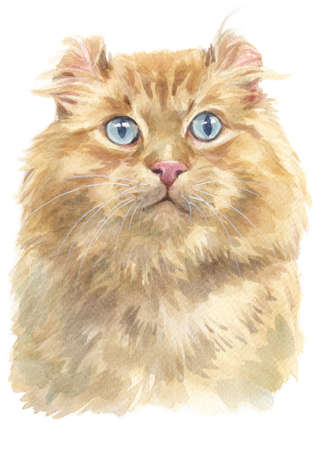 Water colour painting of American curl Cat