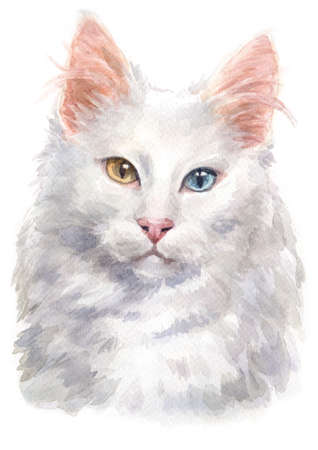 Water colour painting of Turkish angora Cat 047 Stock Photo