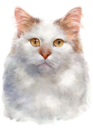 Water colour painting of Turkish van Stock Photo