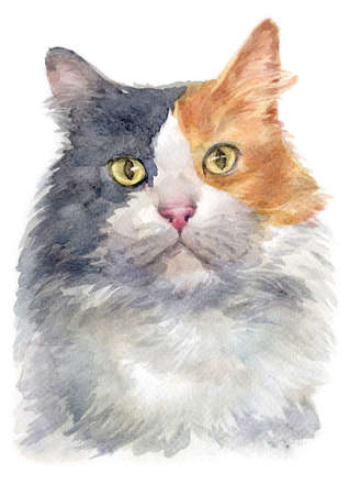 Water colour painting of Dilute calico