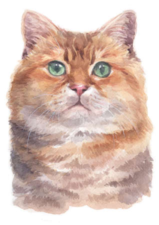 Water colour painting of Hosico  Cat