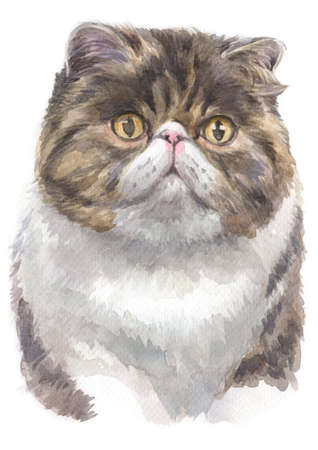 Water colour painting of Exotic shorthair cat