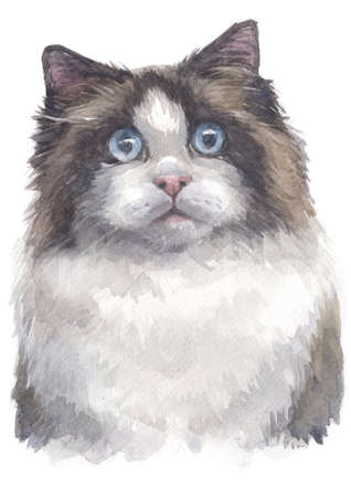 Water colour painting of Ragdoll