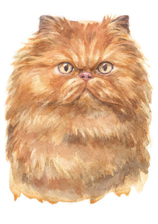 Water colour painting of Persian cat Stock Photo
