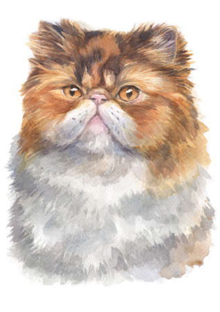 Water colour painting of Persian furry cat Stock Photo