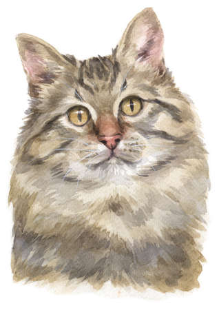 Water colour painting of Siberian cat Stock Photo